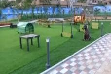 India's First Dog Park Built in Hyderabad; See Pictures