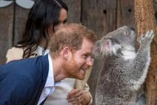 Best Moments of Prince Harry & Meghan Markle's Australia Tour
