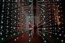 Here's Sneak Peek at Illuminated Kew Gardens in London
