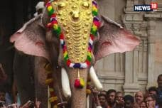 Row Over Ban On Celebrity Elephant 'Ramachandran'​ At Thrissur Pooram