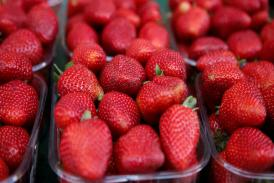 Munch on Strawberries to Pause Time and Undo Ageing