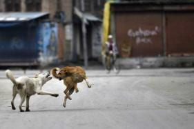 Dogs Are More Likely To Attack Anxious People: Study