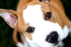 Video Games May Help Ageing Dogs Stay Mentally Nimble