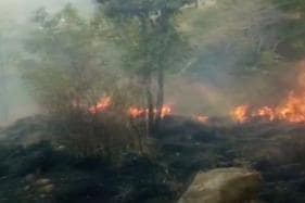 Theni Forest Fire Toll Mounts to 12; Case Lodged Against Trekking Club Owner
