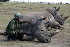 PICS: World's Last 2 Northern White Rhinos in Existence