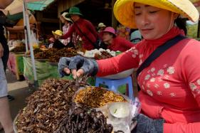 Cambodia Fears Its Favourite Fried Tarantulas Snack May Soon Go Extinct