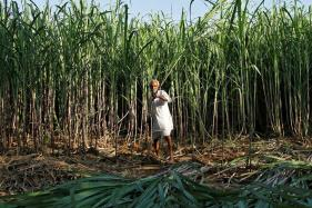 Govt Hikes Sugarcane Price by Rs 20/Quintal to Rs 275/Quintal for 2018/19 Season
