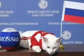 FIFA World Cup 2018: Russia to Win First Match, Says Achilles the Cat