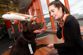 This Airline Will Find a Free Pet Sitter For Your Dog, Free Lodging For Animal Lovers