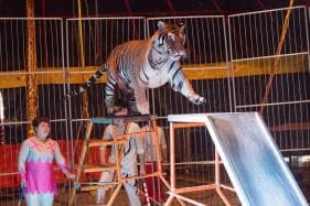 Animals Still a Draw, Despite Shrinking Crowds, Says Chinese Circus