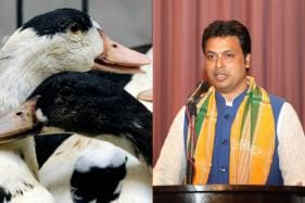 Believe it or Not! Tripura CM Biplab Deb is Right, Ducks Do Increase Oxygen in Ponds