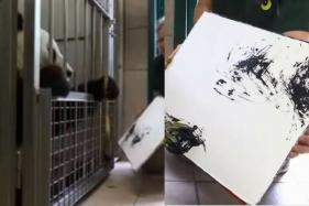 Cute, Cuddly and Captive: The Story of a Panda in Vienna Zoo Whose Each Painting is Sold for ₹40,000