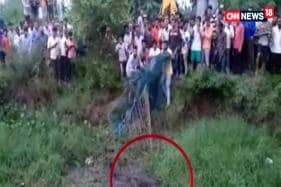 Watch: Crocodile Rescued From Drain