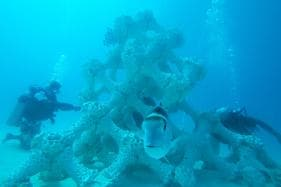 World's Largest 3D-printed Reef Installed in Maldives to Help Save Corals
