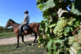Crime in The Vines: Alsace Fights Wine Grape Theft on Horseback