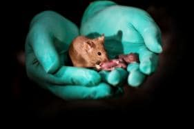 How Scientists Created Healthy Baby Mice from Two Female Mice and What It Means For the Future of Same-Sex Reproduction