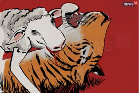 How Maharashtra's Beef Ban Triggered Tiger-Human Conflict and Avni's Killing Was its Outcome