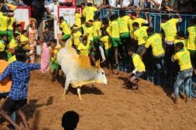 Protests Erupt in Tamil Nadu Village After Jallikattu Event Leads to Caste Violence