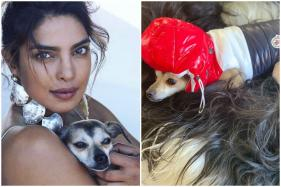 Priyanka Chopra's Pooch, Diana, Flaunts Winter Jacket Worth Rs 36,000