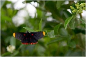 Butterflies, the Unlikely Victims of Trump's 'Beautiful' Southern Wall