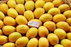 Kochi Man Grows 40 Mango Varieties in Terrace Orchard, Names 'Masterpiece' After Wife
