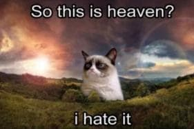 Grumpiest Memes of Grumpy Cat that Brightened us up on our Grumpy Days