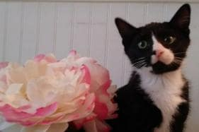 Cat-astrophe! Cat Gets Stuck Inside Washing Machine, Survives 35-Minute Wash Cycle