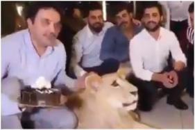 Kurdish Man Smashes Cake into Pet Lion's Face, Netizens Furious over Animal Abuse