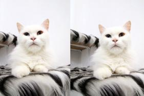 Feline Fondness: You Can Now Clone Your Deceased Cat For Rs 25 Lakhs in China