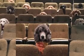 Service Dogs Who Are 'Pawsitivly Adorable' Attentively Watch Theater Production