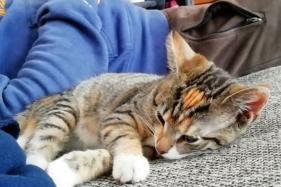 Paw-doable Reunion: Owner Finds Missing Cat 11 Years After He Ran Away