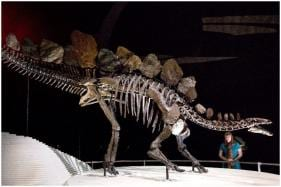 New Species of Stegosaurus Which Lived 168 Million Years Ago Discovered in Moroccan Mountains