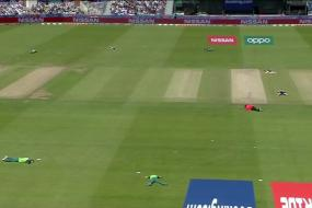 Sri Lanka vs South Africa | Bees Interrupt World Cup Encounter & Leave Players Ducking for Cover