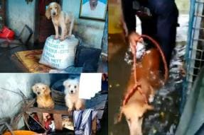 Meet The Team From Chennai Who's Rescuing Your Four-Legged Friends From the Kerala Floods