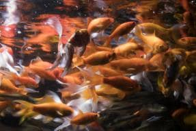 This Paris Aquarium Offers a Haven for Unwanted Pet Goldfish