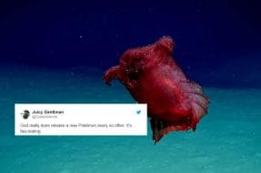 Viral Video Of 'Headless Chicken Sea Monster' Swimming in Sea Has Left People Scared
