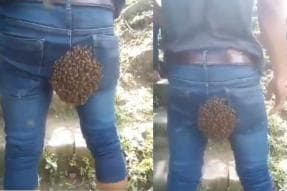 Lo and Bee-hold: Video of 'Beehive' on Man's Back Leaves Netizens Bee-wildered