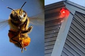 Man Tries to Destroy Hornet's Nest Using Fireworks, Ends up Setting Roof on Fire