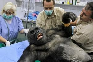 Picturess Show the Pain Doctors Face While Treating Big Animals