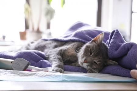 2 pet cats in NY test positive for COVID-19