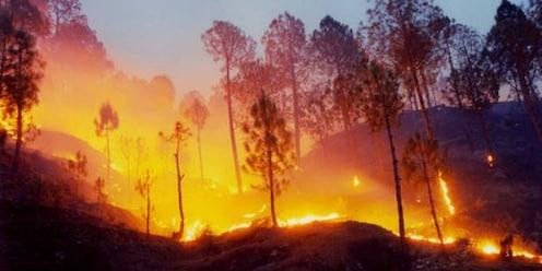 उत्तराखंडच्या जंगलात वनवा पेटला, 6 जणांचा मृत्यू
