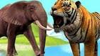 भारतात दररोज एक व्यक्ती हत्ती आणि वाघाकडून मारली जाते !