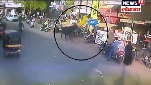 गुजरातमध्ये रस्त्यावरून चालणाऱ्या महिलेला बैलाने हवेत उडवले, व्हिडिओ व्हायरल