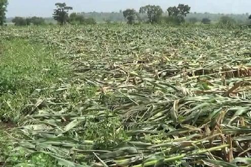 परतीच्या पावसानं शेतकऱ्यांच्या हातातोंडाशी आलेला घास हिरावला!