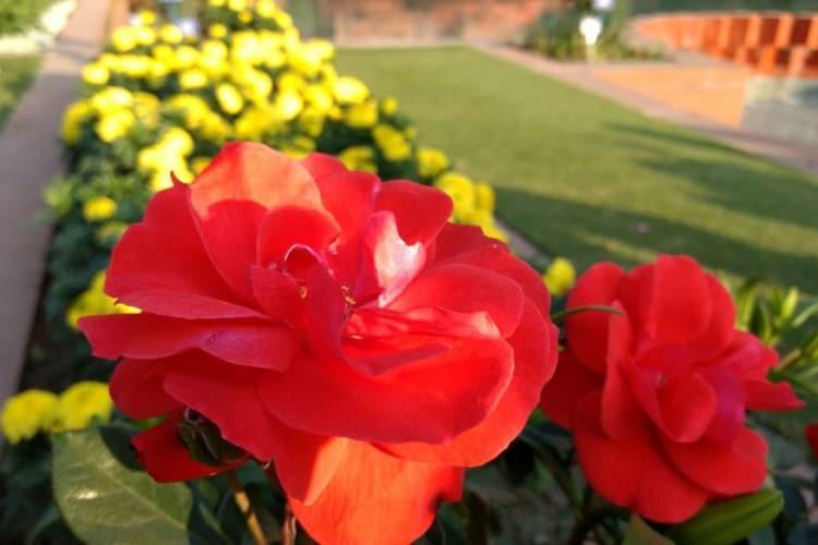 राष्ट्रपती भवनाच्या मागच्या बाजूला हा बगीचा सुंदर फुलांनी सजलाय. इथे देशविदेशातली फुलं आणि झाडं असतात.