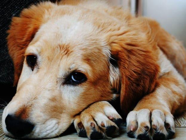 प्राण्यांना विशेष करून कुत्र्यांना येणाऱ्या संकटांची जाणीव होते.