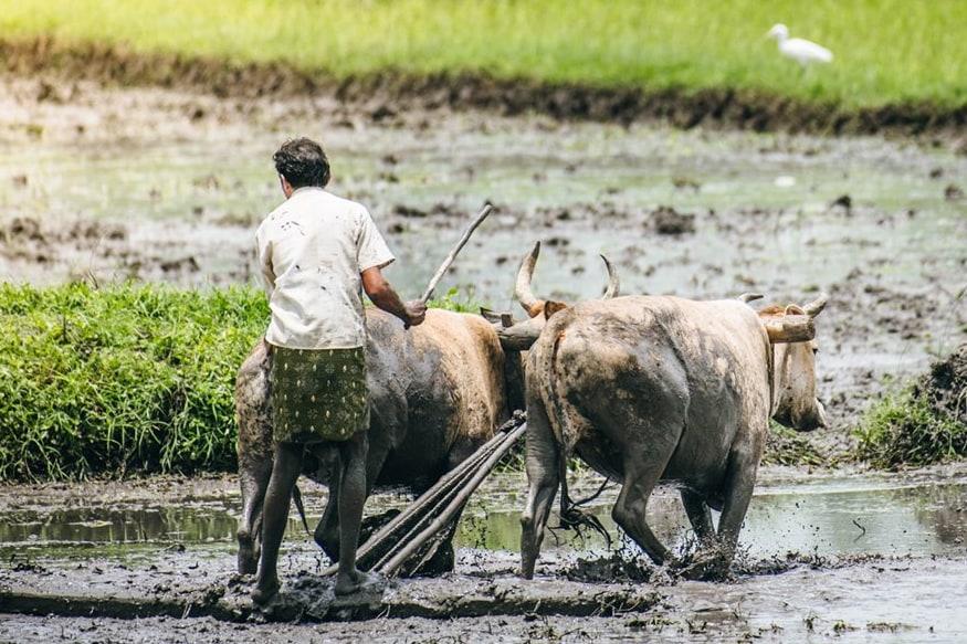 आसामसारख्या लहान राज्यात 80 हजार शेतकऱ्यांनी या योजनेचा लाभ घेतला आहे.  तर उत्तर प्रदेशात 74 लाख शेतकऱ्यांना या योजनेतील पहिला हप्ता मिळाला आहे. कृषी मंत्रालयाने ही आकडेवारी जाहीर केली आहे.