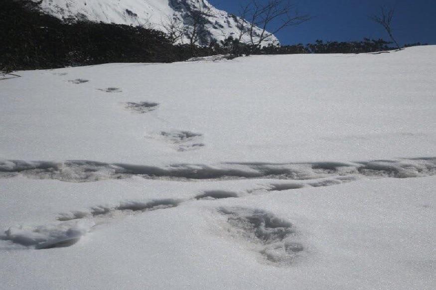 हिममानवाच्या आतापर्यंत आपण अनेक कथा ऐकल्या आहेत. मात्र हिममानव असल्याचं कुणीही पाहिलं नाही. परंतु गेल्या काही दिवसांपासून हिममानवाच्या चर्चा कानावर ऐकू येत आहेत. पण खरंच हिममानव अस्तित्वात आहे का?