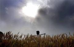 बोगस बियाण्यांबाबत राज्यभरातून 40 हजार तक्रारी, काय म्हणाले कृषीमंत्री?