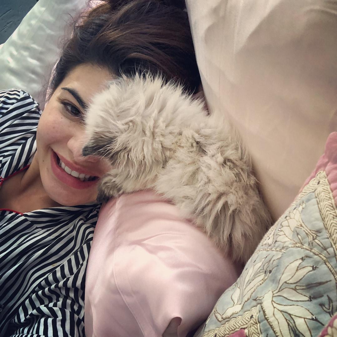 मूळच्या श्रीलंकन वंशाच्या या अभिनेत्रीचं मार्जारप्रेम सर्वश्रुत आहे. तिच्याकडचं परकीय ब्रीडचं हे मांजर सोशल मीडियावरसुद्धा लोकप्रिय आहे. (फोटो - Instagram)